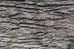 Forest tree bark wood textured trunk background royalty free stock photo