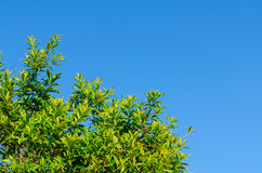 The forest tree and blue sky Royalty Free Stock Photography