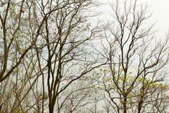 Forest Tree Branch deshojado Fotografía de archivo