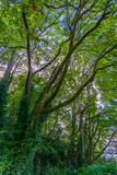 Forest Tree Branches Royalty Free Stock Photo