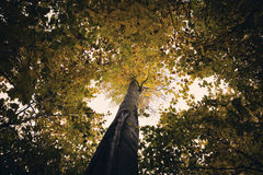 Forest tree canopy in Autumn Royalty Free Stock Photos