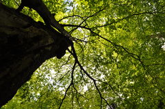 Forest tree crown Stock Photography