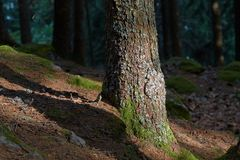 Forest tree detail Stock Photography