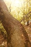 Forest tree detail Royalty Free Stock Photography