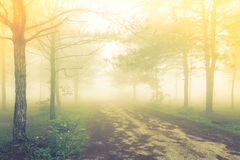 Forest tree during a foggy day Royalty Free Stock Photo