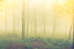 Forest tree during a foggy day Stock Photo