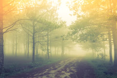 Forest tree during a foggy day Stock Photography