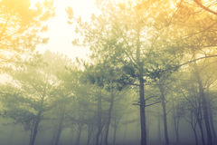 Forest tree during a foggy day Stock Photos