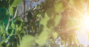 Forest Tree Leaves Cantidad de madera verde de la luz del sol de la naturaleza Hola concepto del verano almacen de metraje de vídeo