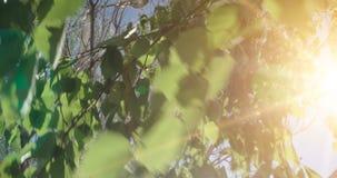 Forest Tree Leaves Metraggio di legno verde di luce solare della natura Ciao concetto di estate video d archivio