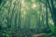 Forest Tree mit Sonnenlicht im Regenwald stockbilder