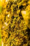 Determination of green moss bryophyta extract