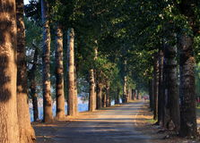 Forest tree road Royalty Free Stock Photo