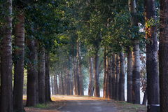 Forest tree road Stock Images