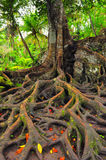 Forest tree with roots and leaves Royalty Free Stock Photography