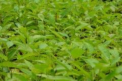 Forest Tree Seedlings Lizenzfreies Stockfoto