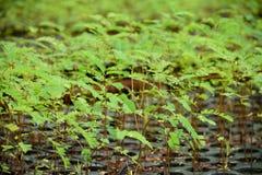 Forest Tree Seedlings Lizenzfreie Stockfotografie