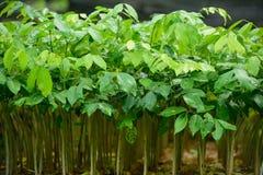 Forest Tree Seedlings Lizenzfreie Stockfotos