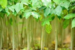 Forest Tree Seedlings Lizenzfreies Stockbild