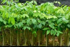 Forest Tree Seedlings Stockfotografie