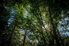 The forest and the tree Royalty Free Stock Photos