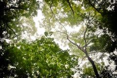 Forest Tree Tops en verano imagen de archivo libre de regalías