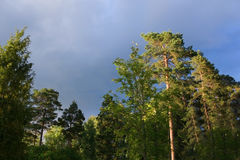 Forest tree tops and thunderstorm clouds Stock Photography