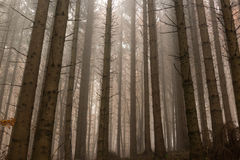Forest in mist Stock Image