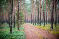 Forest tree trunks and road Royalty Free Stock Photos
