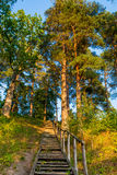 Forest tree trunks and stairs Royalty Free Stock Photography