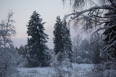 Forest Tree Winter Snow Royalty Free Stock Photography
