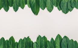Forest Treeline fotografie stock