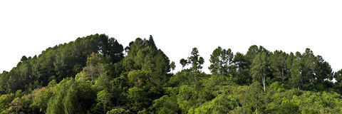 Forest trees. Variety of forest trees on white background royalty free stock photo
