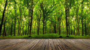 Forest trees. Wood textured backgrounds in a room interior on the forest backgrounds Stock Photography