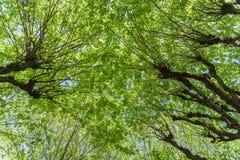 Forest Trees Against Sky verde Fotografía de archivo libre de regalías
