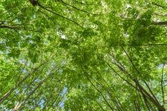 Forest Trees Against Sky verde Imagen de archivo libre de regalías