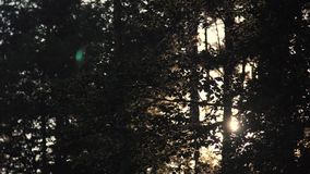 Forest trees against sunset stock video footage
