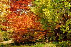 Forest trees in autumn background Stock Photo