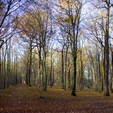Forest of trees in autumn Stock Photo