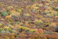 Forest trees background Royalty Free Stock Photography
