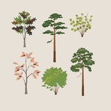 Collection of forest trees Stock Photo