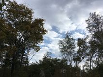 Forest, trees, blue-gray cloudy sky. Nature, Vladivostok countryside. Forest, trees, blue-gray cloudy sky. Nature, Vladivostok countrye in early autumn Royalty Free Stock Photos