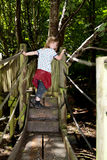 Forest trees bridges child playing Stock Image