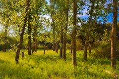 Forest trees at a bright sunny day with shadows and green grass royalty free stock photography