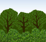 Forest  with trees and bushes Stock Photo