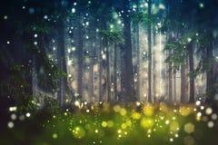Forest Trees, claro de madera - místico, Bokeh, llamaradas de la lente, falta de definición de la cámara - luz del sol Imagenes de archivo