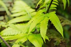 Forest Trees Close Up Leaves tropical Photo libre de droits