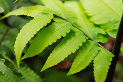 Forest Trees Close Up Leaves tropical Photographie stock