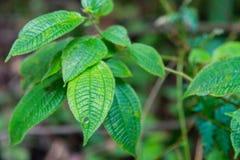 Forest Trees Close Up Leaves tropical Images libres de droits