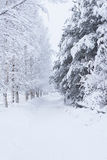 Forest trees covered in snow Royalty Free Stock Photos